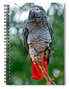 African Grey Parrot Spiral Notebook