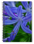African Lily Spiral Notebook