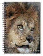 African Lion #5 Spiral Notebook