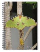 African Moon Moth Spiral Notebook