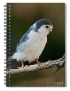 African Pygmy Falcon Spiral Notebook