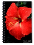 Georgia Red Hibiscus After A Rain Greensboro Georgia Art Spiral Notebook