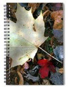After The Frost Spiral Notebook