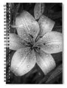 After The Rain Spiral Notebook