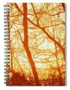 Afternoon Love  Spiral Notebook