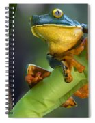 Agalychnis Calcarifer 4 Spiral Notebook