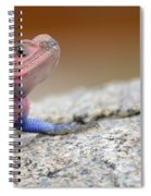 Agama Spiral Notebook