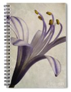 Agapanthus Africanus Star Spiral Notebook