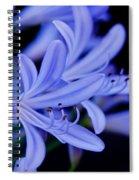 Agapanthus Blue Spiral Notebook