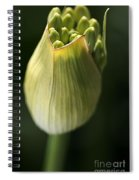 Agapanthus In The Daylight Spiral Notebook