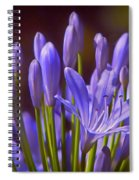 Agapanthus - Lily Of The Nile - African Lily Spiral Notebook