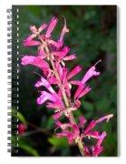 Agastache Ava Spiral Notebook