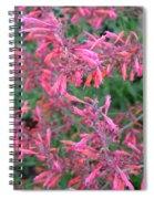 Agastache Rupestris 1 Spiral Notebook