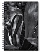 Agave Black And White Dsc08571 Spiral Notebook