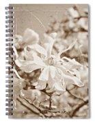 Antique Magnolia Bloom Spiral Notebook