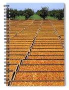 Agriculture - Blenheim Apricots Spiral Notebook