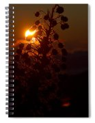 Ahinahina - Silversword - Argyroxiphium Sandwicense - Sunrise On The Summit Haleakala Maui Hawaii  Spiral Notebook