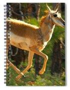 Airborn Pronghorn Spiral Notebook