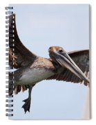 Airborne Brown Pelican Spiral Notebook