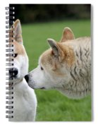 Akita Inu Dogs, Old And Young Spiral Notebook