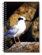 Alabama Tern Spiral Notebook