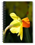 Alabama's Call For Spring Spiral Notebook