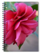 Alabama's Fading Camelia Spiral Notebook