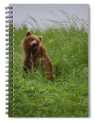 Alaska2010.-brown Beers On The Kenai Spiral Notebook