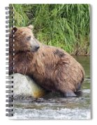 Alaskan Grizzly Spiral Notebook