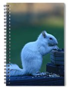 Albino Squirrel Spiral Notebook