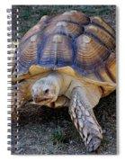 Aldabra Tortoise Spiral Notebook
