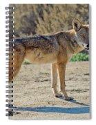 Alert Coyote Spiral Notebook