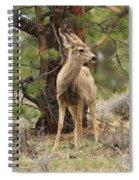 Alert In The Rockies Spiral Notebook