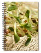 Alfalfa Sprouts Spiral Notebook
