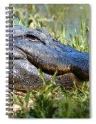 Alligator Smiling Spiral Notebook