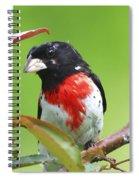 Alittle Ruffled Spiral Notebook