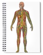 All Body Systems In Male Anatomy Spiral Notebook