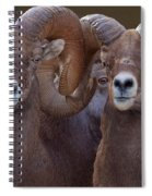 All Eyes Spiral Notebook