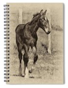 All Legs Sepia Spiral Notebook