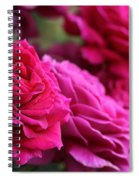 All The Fuchsia Pink Roses  Spiral Notebook