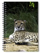 All Tuckered Out Spiral Notebook