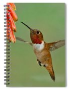 Allens Hummingbird At Flowers Spiral Notebook