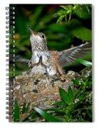Allens Hummingbird Chicks Spiral Notebook