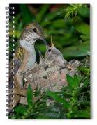 Allens Hummingbird Feeds Young Spiral Notebook