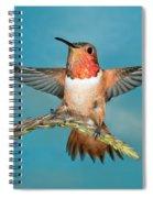 Allens Hummingbird Male Spiral Notebook
