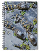 Alligator Babies IIi Spiral Notebook