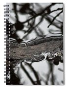 Alligator Eye Spiral Notebook