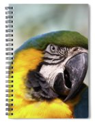 Alligator Farm Resident Spiral Notebook