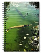 Alligator Gar Spiral Notebook