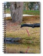 Alligator Hazard Spiral Notebook